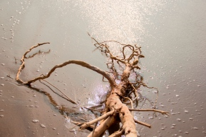 Waves and the Root 2