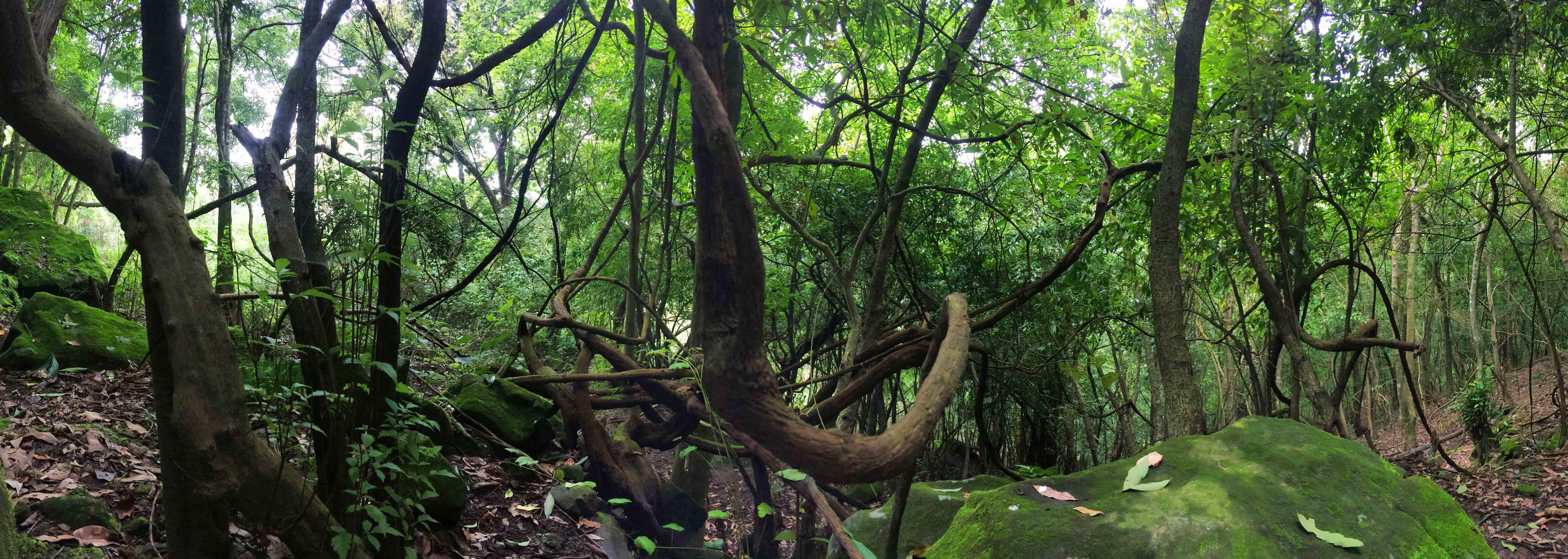 Kikli Forest